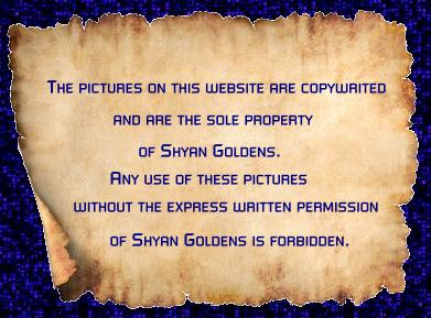 The pictures on this website are copywrited and are the sole property of Shyan Goldens. 